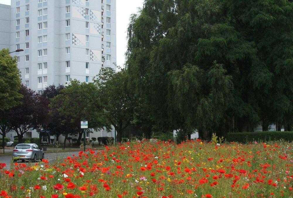 Une approche écologique du fleurissement urbain