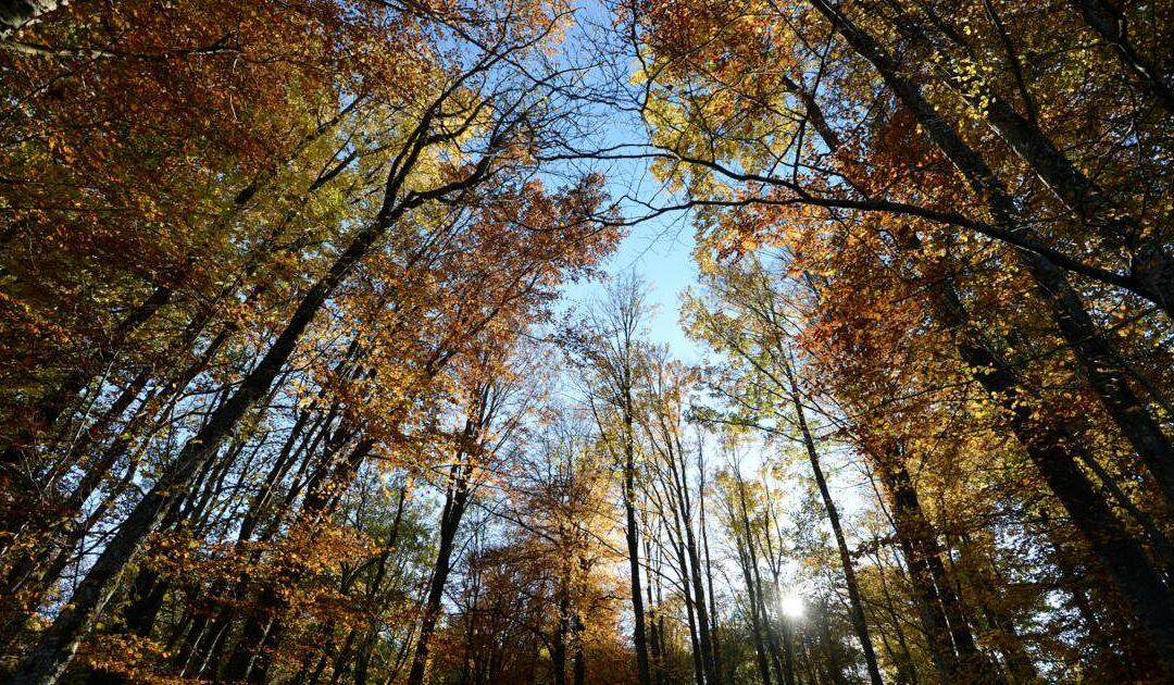 Une vue de la forêt de Fontainebleau, en Ile-de-France © AFP/Archives/Patrick Hertzog
