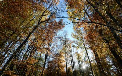 Les forêts françaises