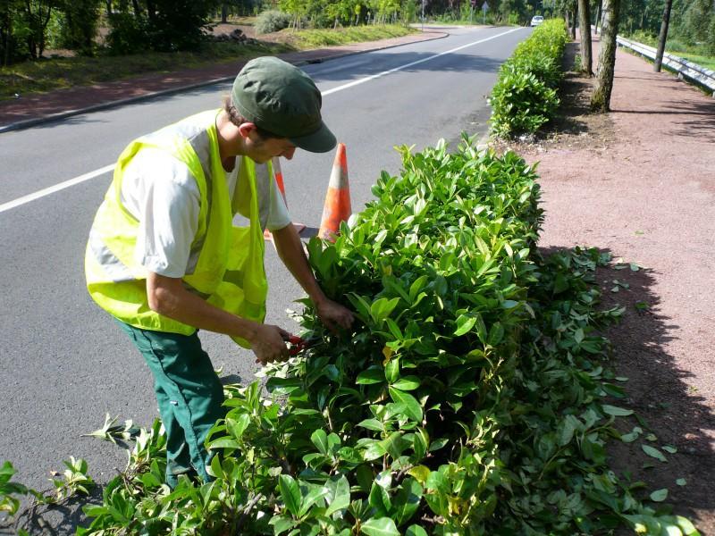 Mieux gérer les arbustes en milieu urbain