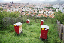 JDA-abeilles-en-ville