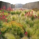Le-jardin-des-orpins-sur-le-toit-de-la-base-sous-marine
