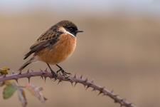 Les oiseaux disparaissent des campagnes françaises à une vitesse « vertigineuse »