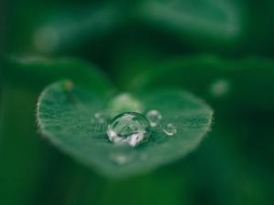 À Lyon, on apprivoise la pluie pour mieux récupérer l'eau