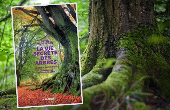 La vie secrète des arbres – Peter WOHLLEBEN (Traduction : Corinne Tresca)