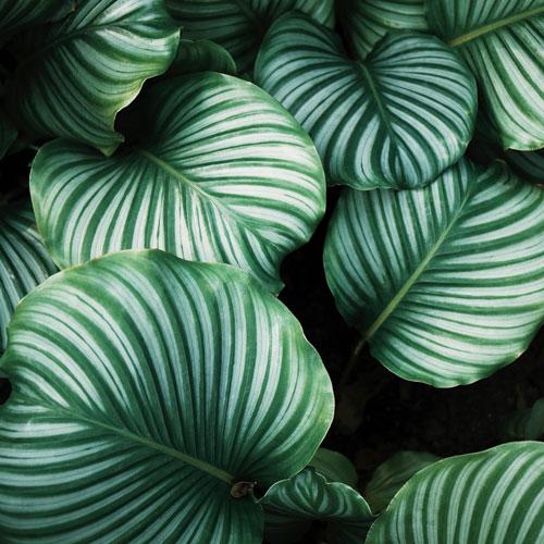 Les plantes déjà sous l'influence du changement climatique
